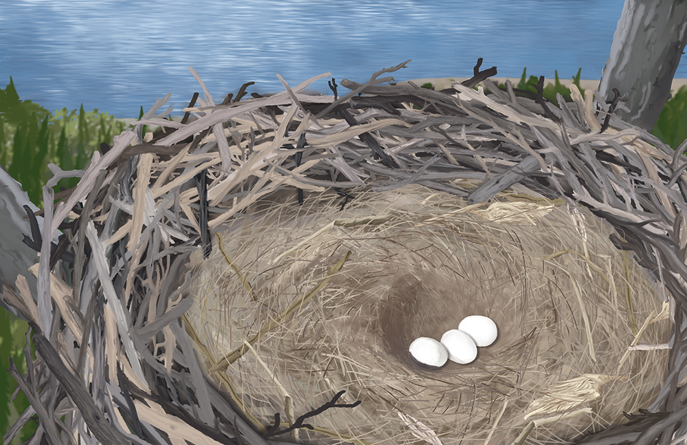 Illustration of an eagle nest