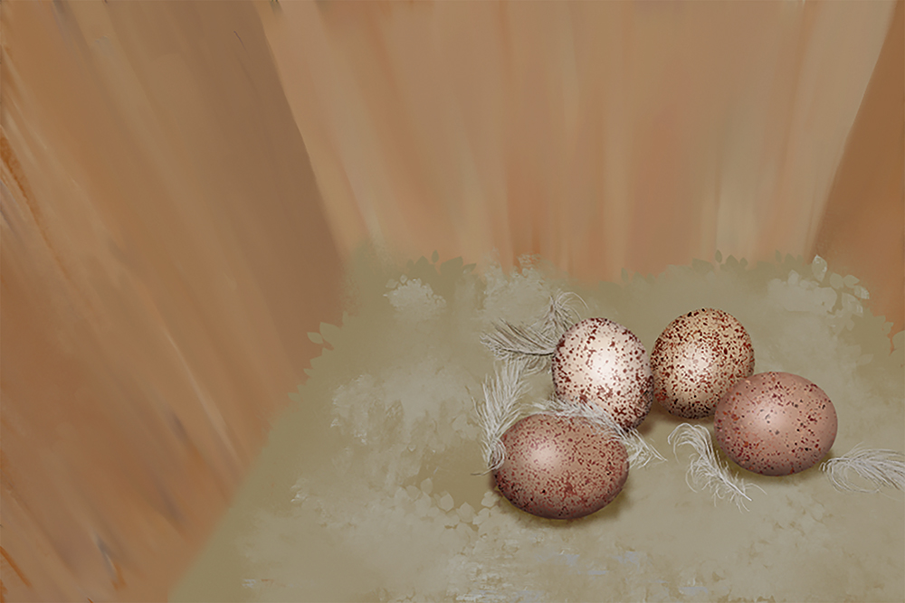 Illustration of a kestrel nest