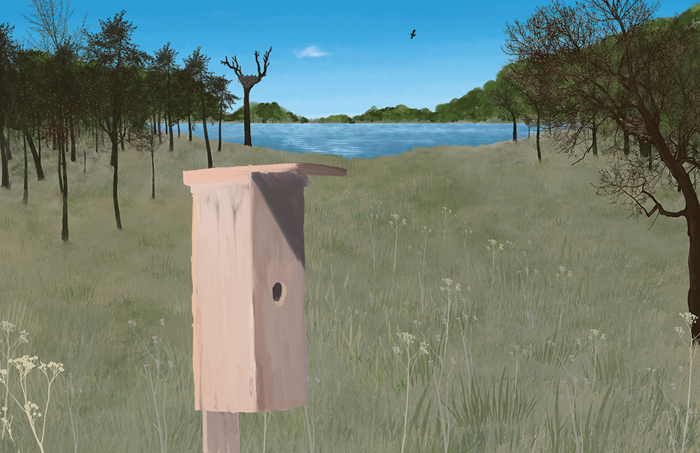 Illustration of a bird house in a field