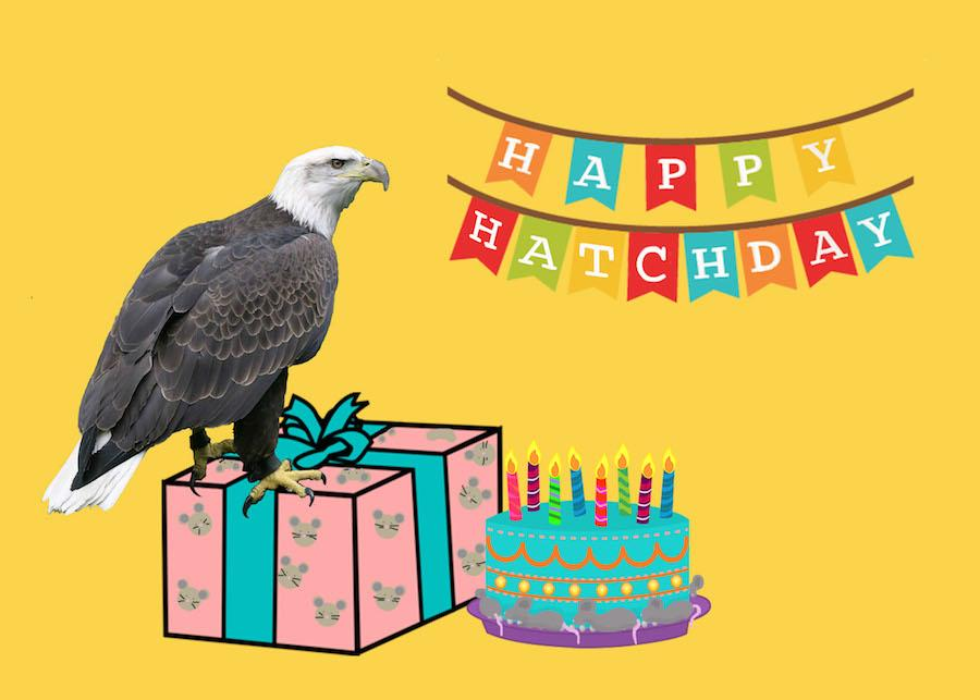 "A graphic depicting an eagle perched upon a wrapped birthday present beside a birthday cake. There is a banner over them that reads ""Happy Hatchday"""