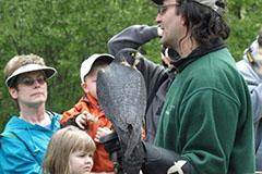 Raptors of Minnesota program. A group looks at a peregrine falcon perched in the hand of a raptor handler