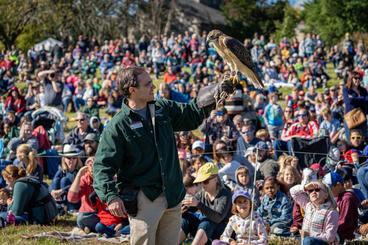 Person holding a red-tailed hawk in front of a crowd