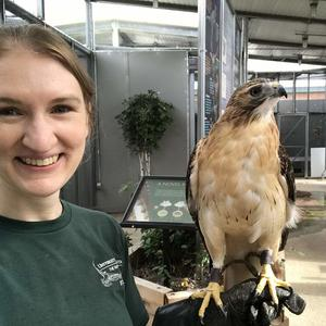 TRC naturalist with a red-tailed hawk