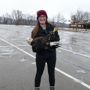 Kelly Auxier, digital communications specialist on the Advancement team at the College of Veterinary Medicine, prepares to release a juvenile bald eagle in Red Wing, Minnesota