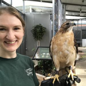 Virtual tour with red tail hawk