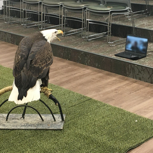 bald eagle in front of a computer