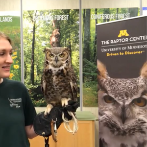 great horned owl on the glove